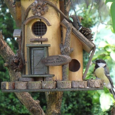 DIY Bird Feeder – Build Your Own