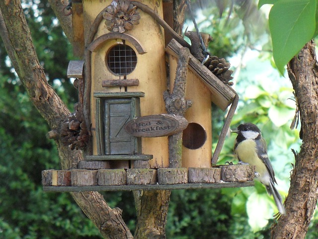 DIY Bird Feeder – Build Your Own
