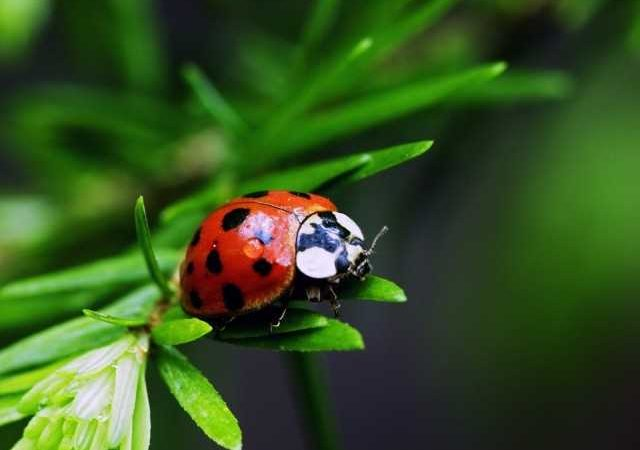 Tips For Selecting a Pest Control Professional